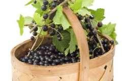 Вкусные рецепты: Ждём гостей, лимонное чатни с белым виноградом, Нежнейший и соблазнительный ЧизХаузКейк